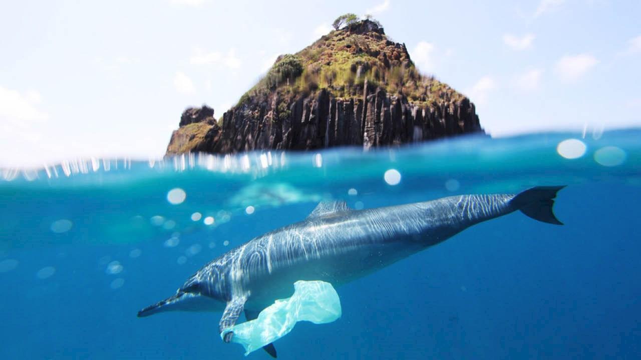 Was können wir tun, um den Plastikmüll in den Weltmeeren zu bekämpfen?