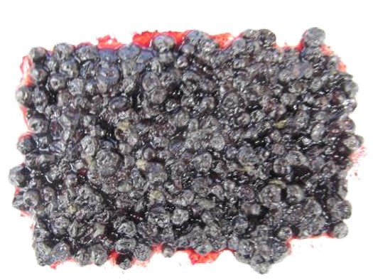 Can you spot the fruit flies in these frozen blueberries?