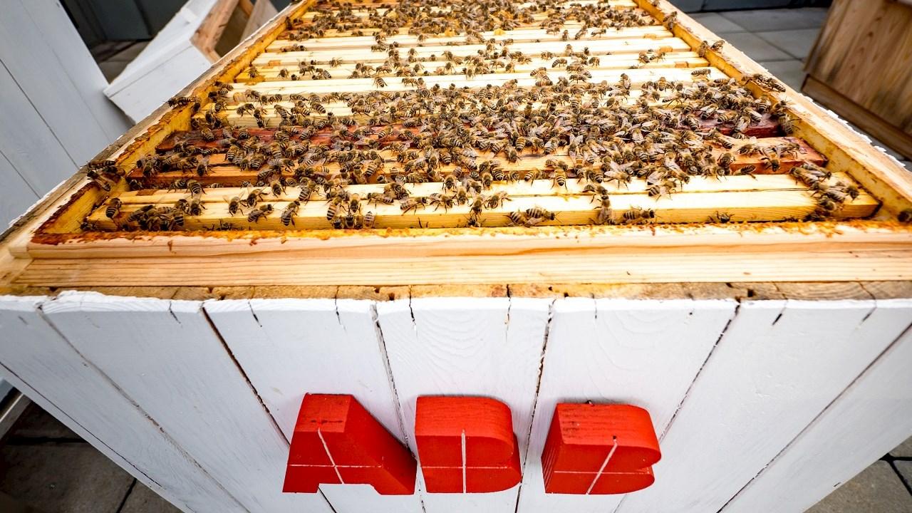 Bienen und Big Data: Wie passt das zusammen?