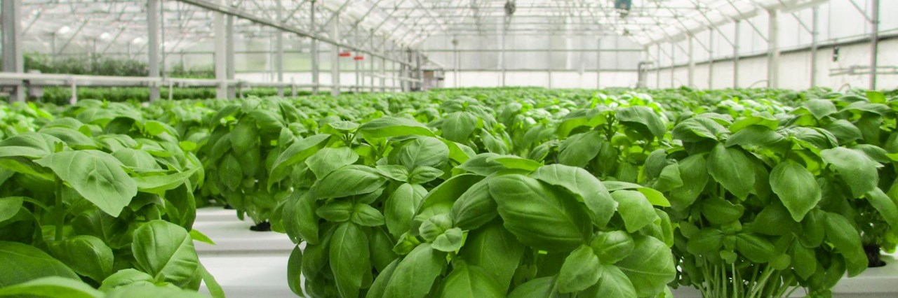 Controlled environment agriculture enabls farmers to reach full production potential