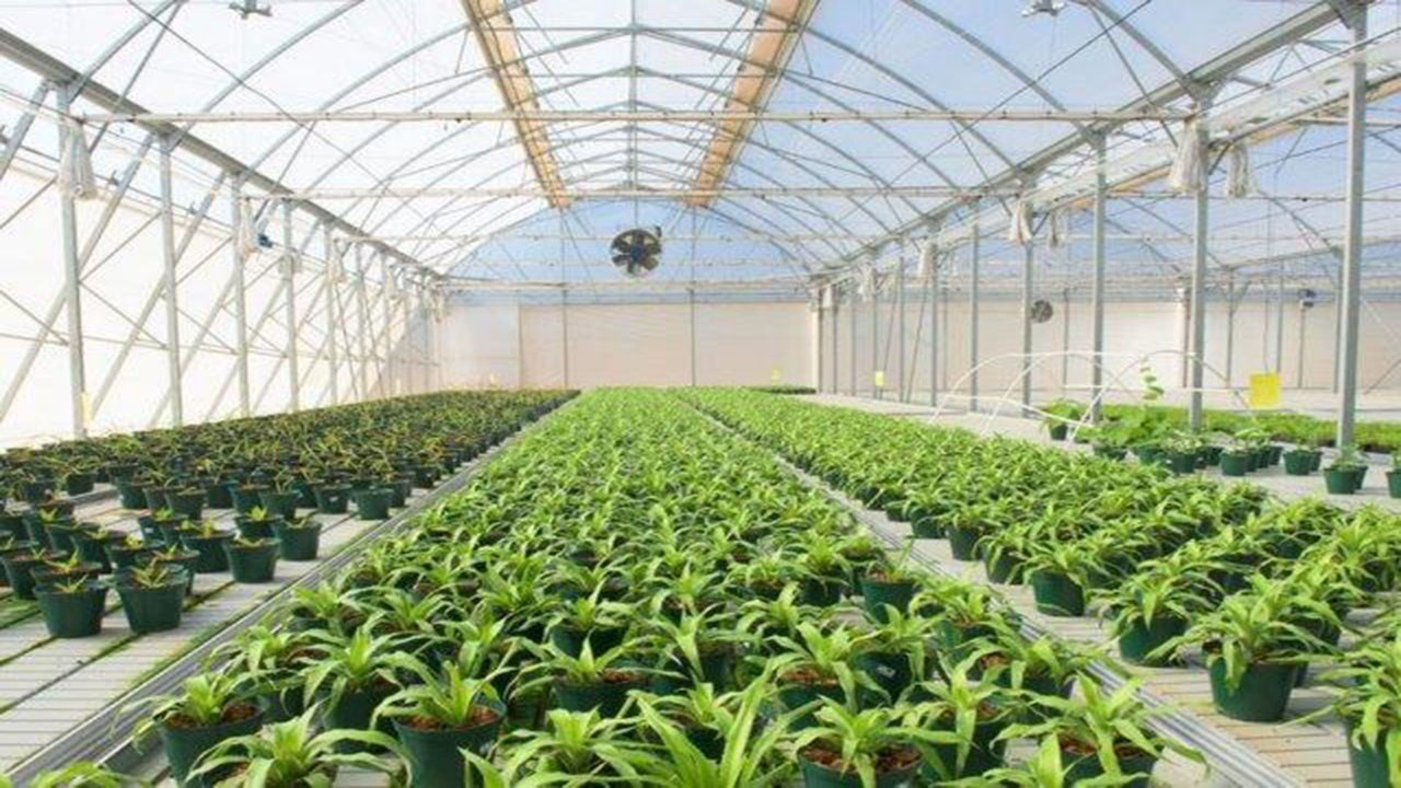 ABB technology improves energy supply reliability at Africa's largest climate-controlled agricultural facility