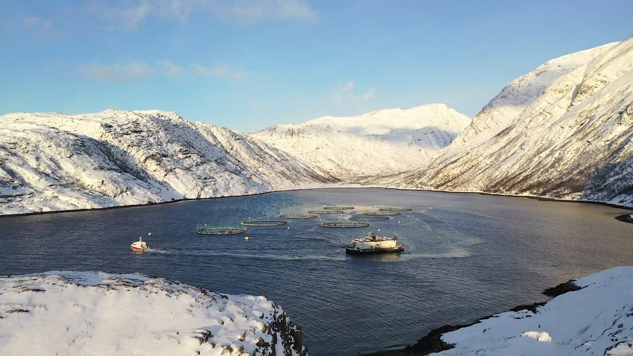 A Norway Royal Salmon több egészséges lazacot termel alacsonyabb költségen és környezettudatosabban