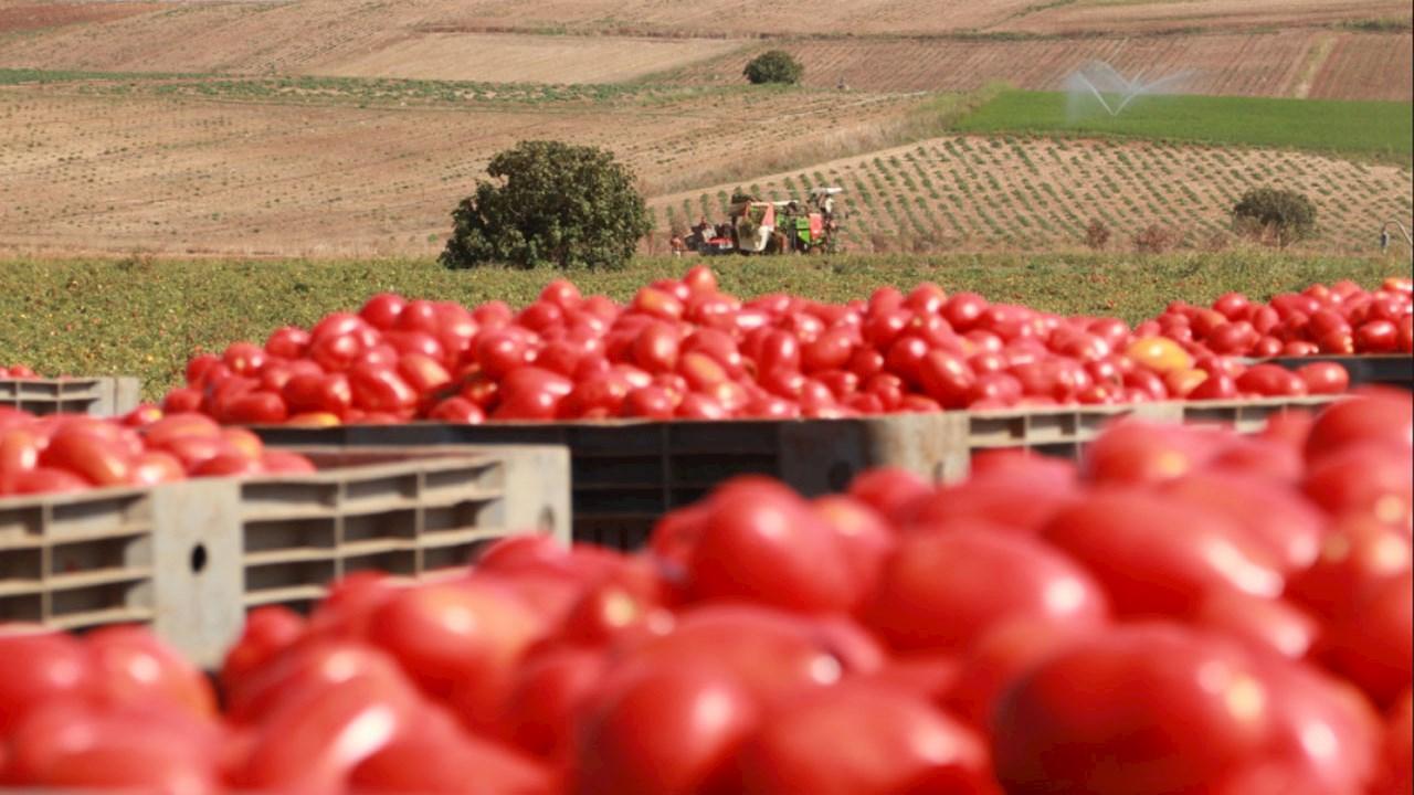 Intelligent Distribution per il controllo della lavorazione del pomodoro di Sardegna