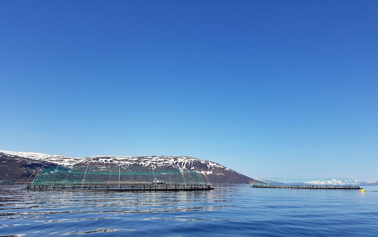 ABB elektrifiserer arbeidsbåt for en av verdens første oppdrettsanlegg for torsk (Ill. Norcod).