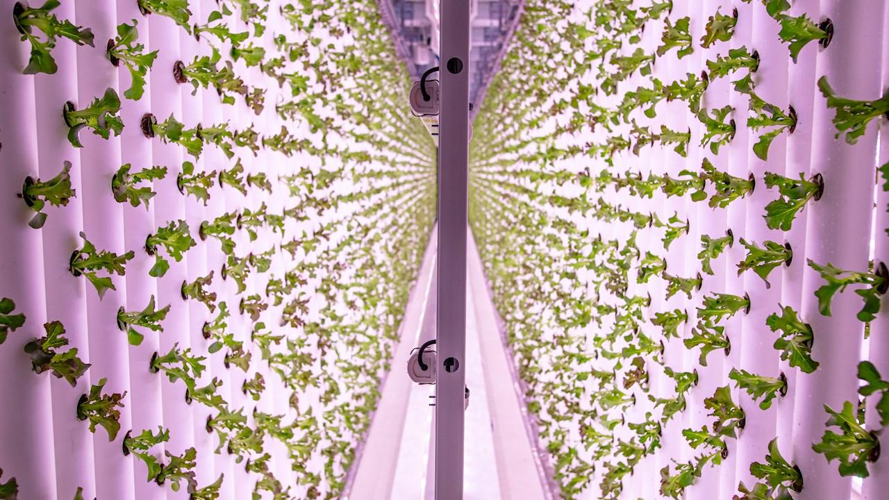 ABB hjälper vertikalodlaren Ljusgårda att växa