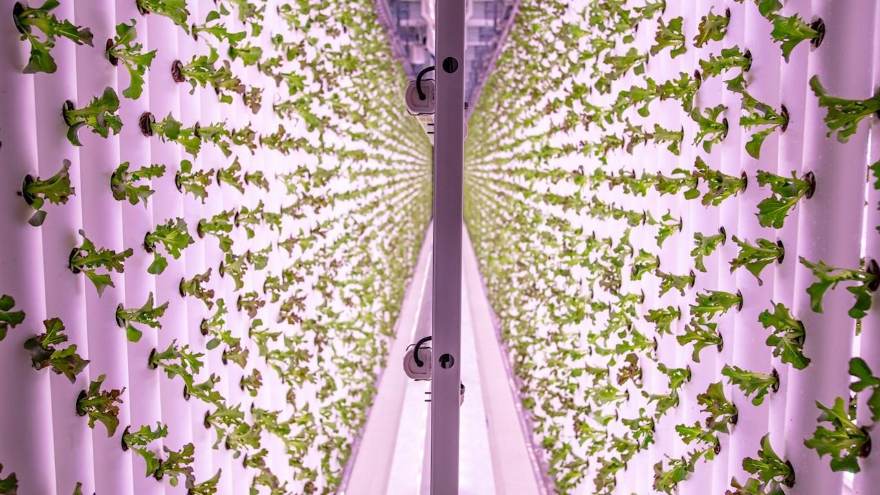 ABBが垂直農法のLjusgårdaの成長に貢献